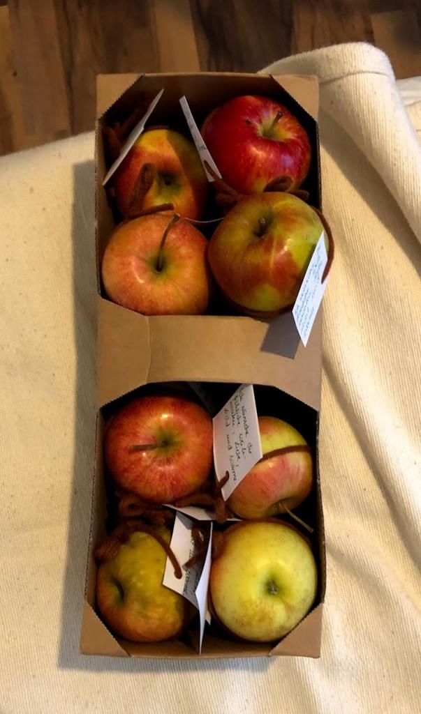 Die Apfelbox mit allen Äpfeln